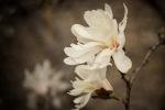 Rachel Burke | Spring Flowers