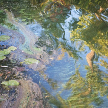 Untitled I by Julia Pergolizzi